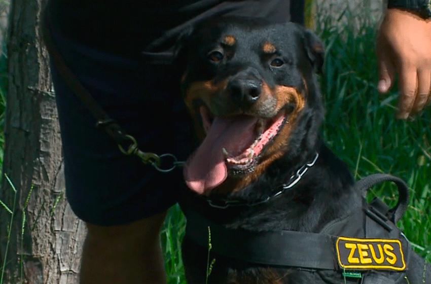 Cães da Guarda Municipal de Tietê vão se aposentar