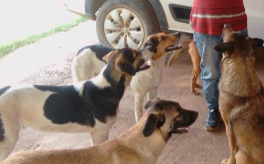 5 cachorros mortos e um muito machucado em Piedade